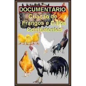 Fantástico Documentário De Frangos + Galos + Chocadeira