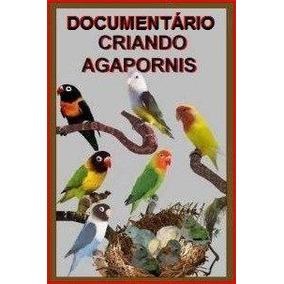 Fantástico Documentário De Criação De Agapornis + Brindes!!!