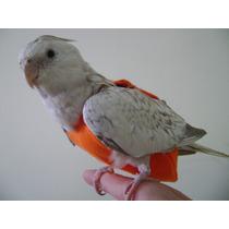 Fralda / Roupa Para Calopsita , Papagaio , Agapornis
