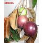 Muda Da Fruta Rara E Exótica Abiu Roxo, Abil, Arvore Linda.