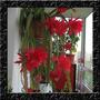 Sementes De Flor Cacto Orquidea Epiphyllum Mix P/ Mudas