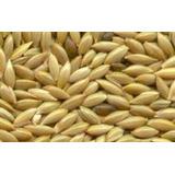 Semente De Alpiste (granel 1kg) Qualidade Premium
