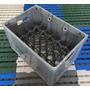 Garrafeira /engradado /caixa P/24 Garrafas De Cerveja 600ml