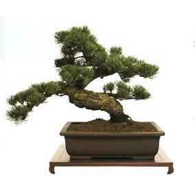 Técnicas Del Bonsai + Libro Del Bonsai