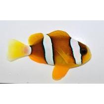 Peixe Palhaço Clarkii 3 A 4 Cm, Nemo, Marinho