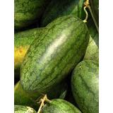 20 Sementes De Melancia Gigante Congo Watermelon Raras