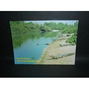 Cartão Postal Pantanal Matogrossense Jacarés .