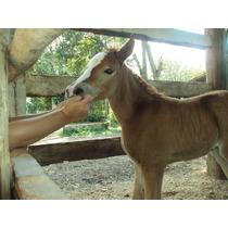 Nosso Rancho -cavalgadas-cocheiras-venda De Animais