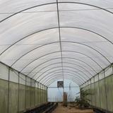 Vendo Estufa Agricola Com 401m2 - Pé Direito De 4m