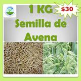 1 Kg De Semillas De Avena, Cultivo, Germinación, Siembra