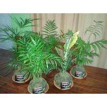 Kokedamas Premium - Artesanía Japonesa En Plantas
