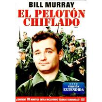 Dvd Peloton Chiflado (stripes) 1981 - Ivan Reitman