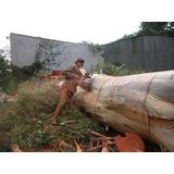 Poda, Tala, Extracciones, Trabajos En Altura 11-3286-6416