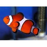 Ração P/ Peixe Reprodução Hormônios Ornamental Frete Grátis