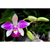 10 Sementes De Orquideas Raras + Frete Gratis