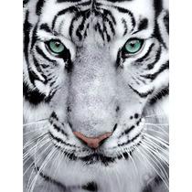 Felinos Tigres En Bastidor Canvas 70x50 Cm Exelente Envios