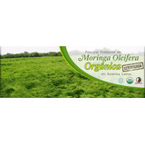 Moringa Oleifera Orgánica Produccion Familiar 100 Grs Saiku