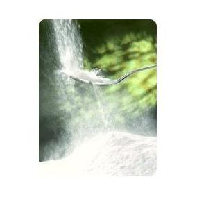 Inulina De Agave Tierra Blanca 1 Kg. A Granel