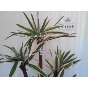 Planta Yuca Artificial Fina Decorativaya Con Maceta 1:70
