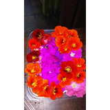 Petalos De Flores Comestibles Organicas