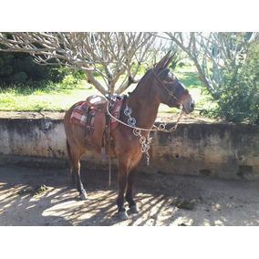 Mula Marchadeira - Muito Mansa