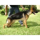 Microchip Perros Y Otras Especies