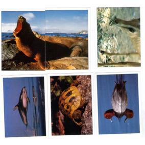 Figurinhas Animais Selvagens Álbum Panini - C1a1