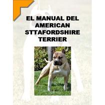 Conoce Educa Y Adiestra A Tu American Staffordshire Terrier