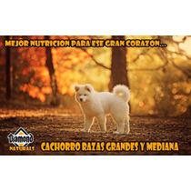 Croqueta Diamond Puppy Large Breed 18kg Envio Gratis Yucatan