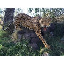 Animales Disecados 100% Artificiales Jaguar Para Intemperie