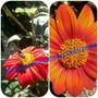 Plantulas Y Semillas De Flores Para Tu Jardin