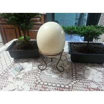 Huevos De Avestruz Cascaron
