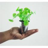 1 Suculenta - Vasinho Mini Artificiais Artificial Folhagem