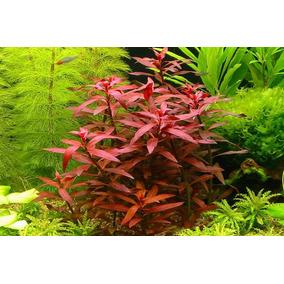 Planta Para Aquario(kits Contendo 23 Plantas)