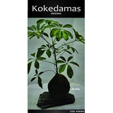 Kokedamas Original - Aralia - Kok Arte Natural