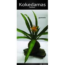 Kokedamas Original - Guzmania - Kok Arte Natural