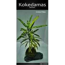 Kokedamas Original - Croton Fideo - Kok Arte Natural