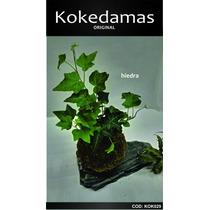Kokedamas Original - Hiedra - Kok Arte Natural