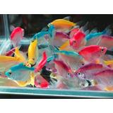 Tetra Color Bits X 300 Grms. Discus Y Otros Tropicales!