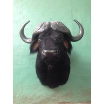 Animales Disecados 100% Artificiales. Bufalo Cabre Cabeza