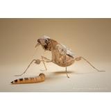 Zophobas X50 Ideal Para Geckos, Pogonas, Erizos Y Aves