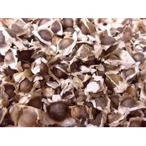 150 Semillas De Moringa Oleifera Excelente Calidad