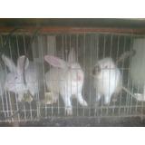 Venta Y Formación Conejos/producción De Carne-cab.santamaria