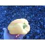 Semillas De Ají Pimiento Amarillo