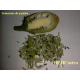 Jambu Do Pará. Kit 1000 Sementes. #frete Grátis#.