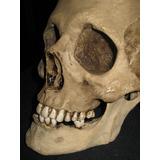 Réplica Cráneo Calavera Humana, Teatro, San La Muerte, Hueso