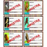 20 Placas De Gaiola, Identificação Pássaros Preço De Atacado