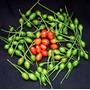 40 Semillas De Capsicum Annum (chile Piquin) Codigo 470