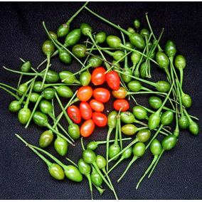 40 Semillas De Capsicum Annum - Chile Piquin Codigo 470