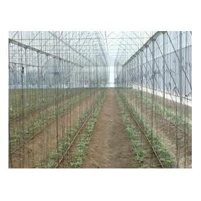 Corrida Financiera Para Proyecto Jitomate En Invernadero